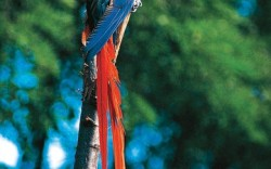 If I were reincarnated as an animal I would be A beautiful multicolored bird like a parrot