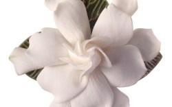Favorite Wedding Flowers
