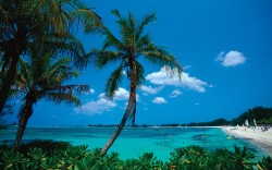 andy murray Bahamas
