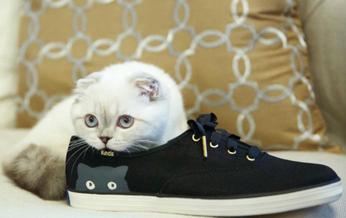Taylor Swift Keds Cat shoes