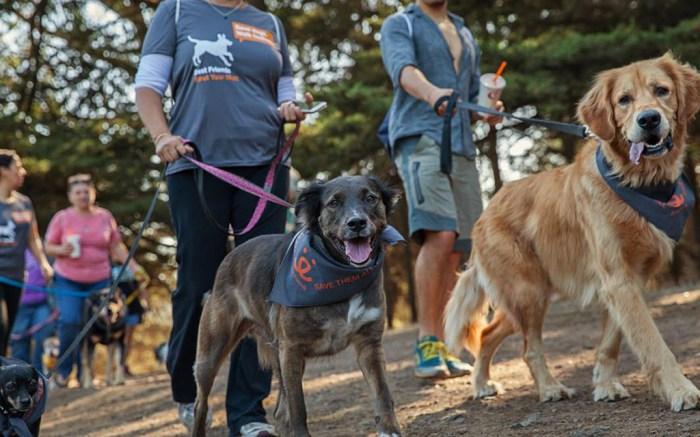 Best Friends Animal Society Zappos