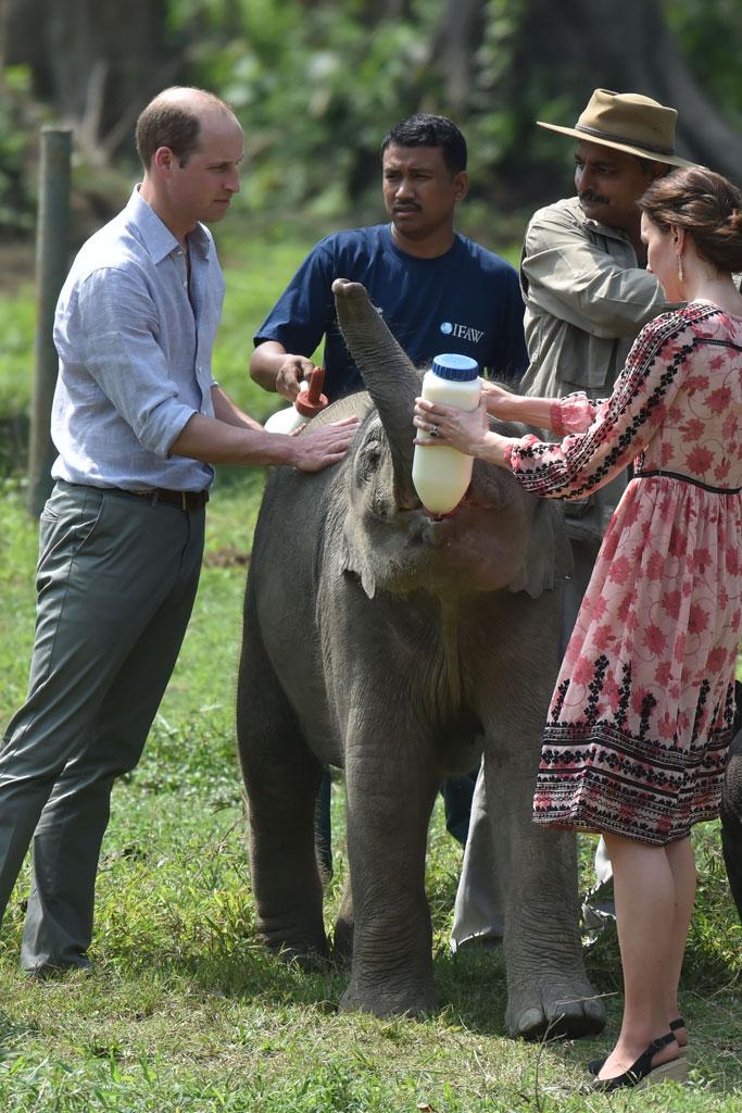 Kate MIddleton Prince William Animals India