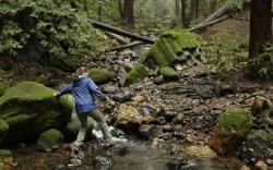 Redwood Creek Archer Taylor Preserve Napa