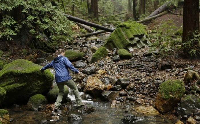 Redwood Creek Archer Taylor Preserve Napa California