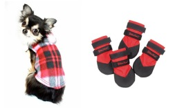 Matching Dog Shoes and Outfits