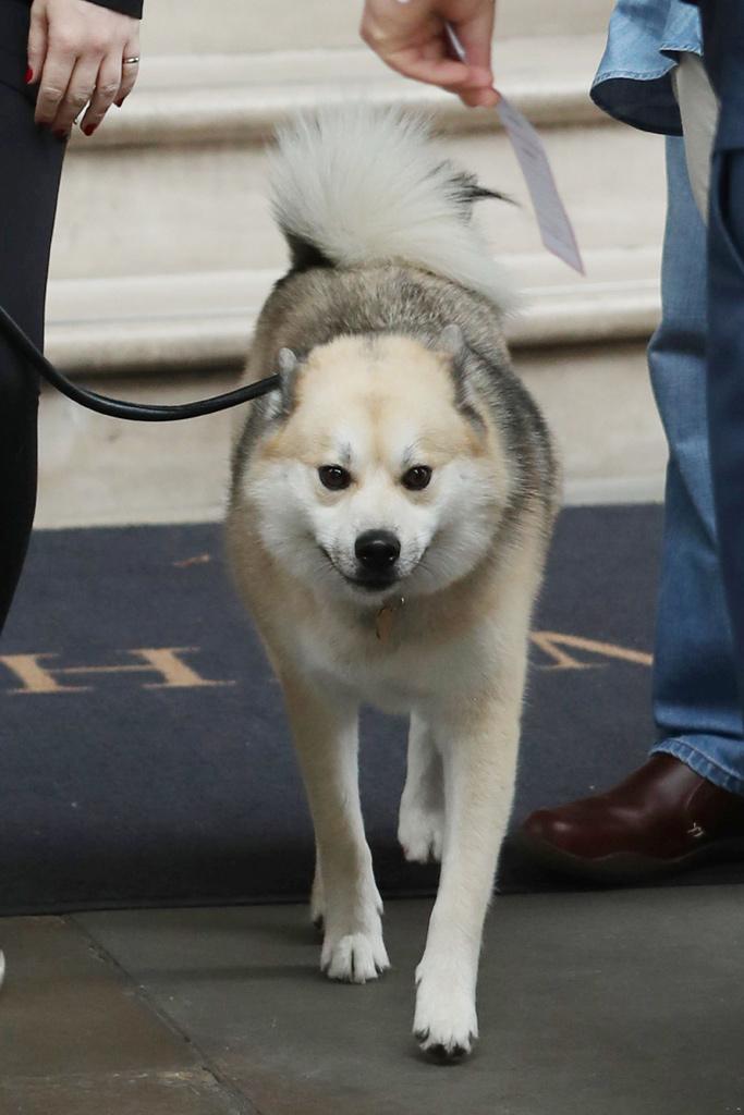 cara delevingne dog valerian london