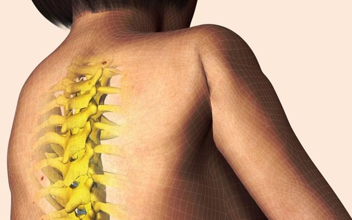 spine, illustration