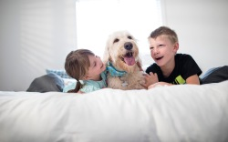 Zappos for Good pets