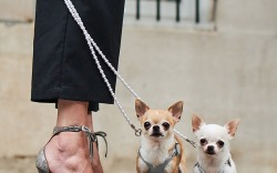 Neiman Marcus x The Dogist Fall '17 Campaign