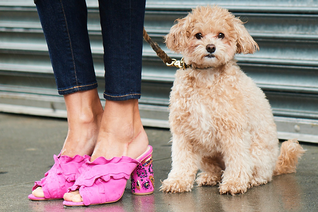 Cute Dogs Star in Neiman Marcus' Fall