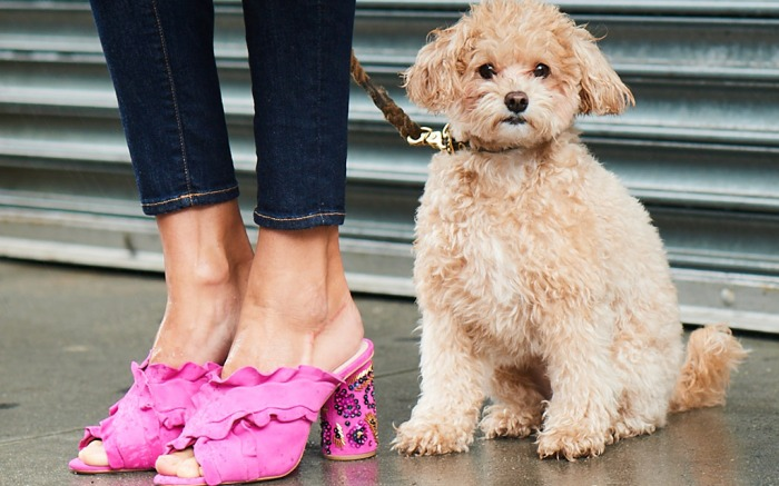 neiman-marcus-the-dogist-campaign-1