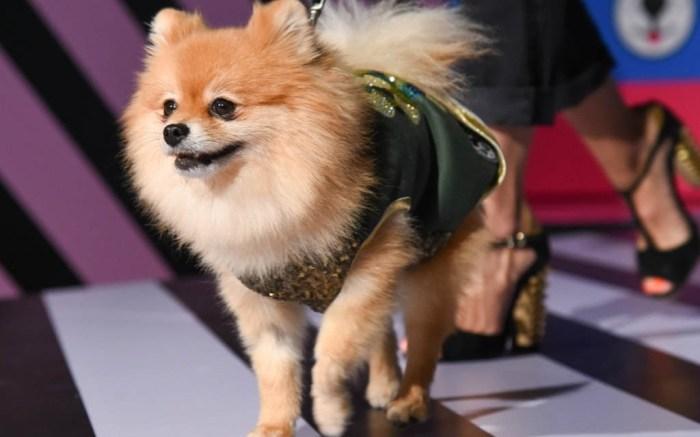 sniffe dogwear, london fashion week