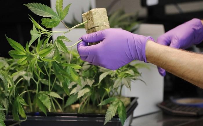 Marijuana Sales California
