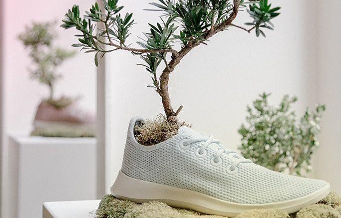 Allbirds Tree Sneakers