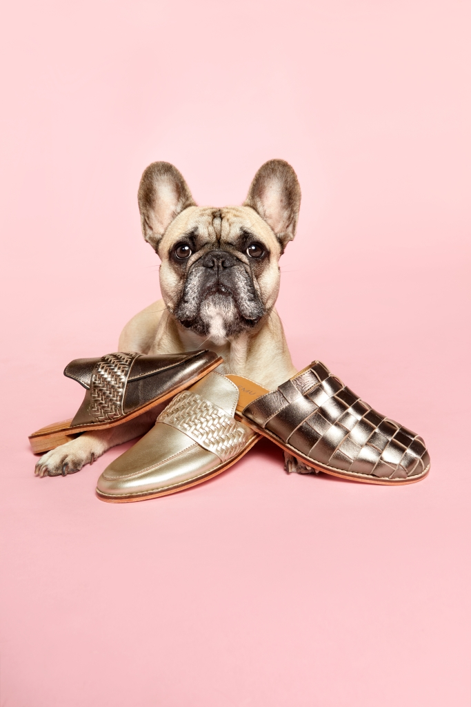 8 Adorable Dogs Pose With Cozy Shoes and Slippers friday french bulldog emu australia