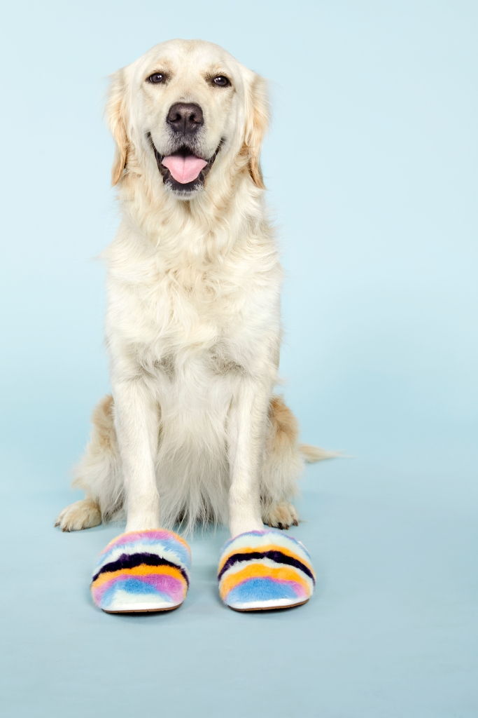 8 Adorable Dogs Pose With Cozy Shoes and Slippers hazel golden retriever uggs