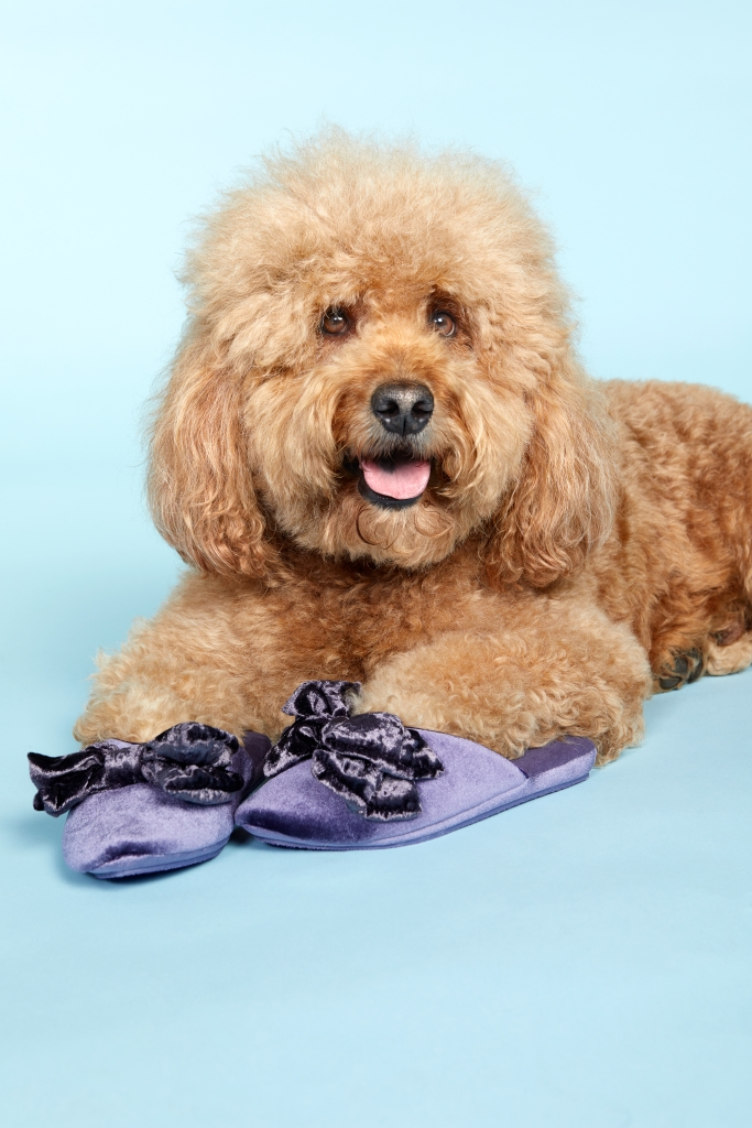 8 Adorable Dogs Pose With Cozy Shoes and Slippers samson the dood goldendoodle chinese laundry slippers