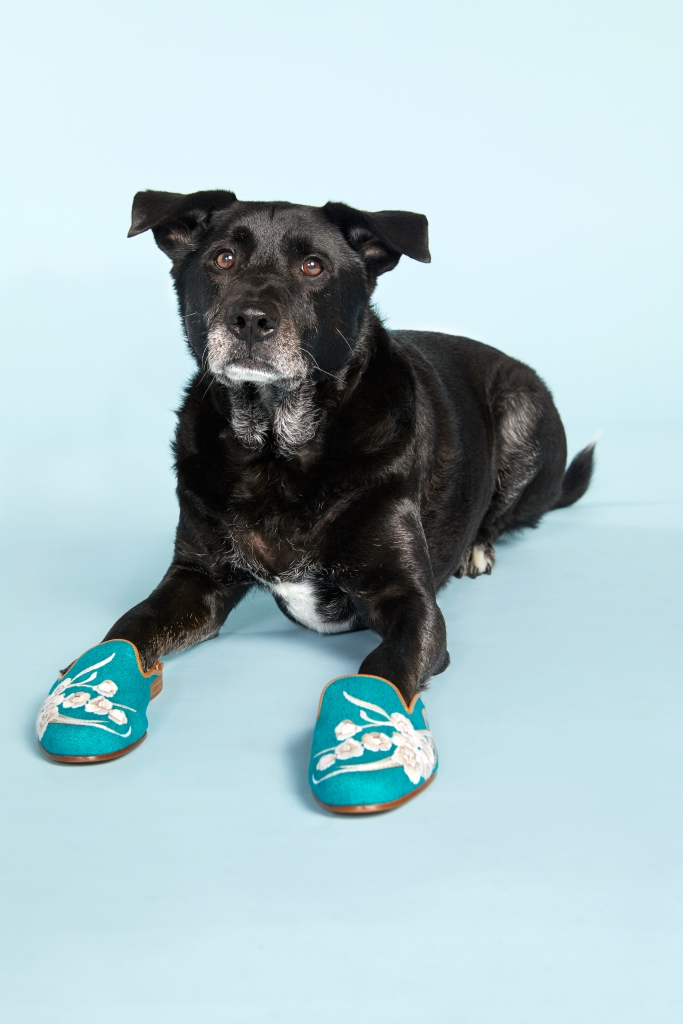 8 Adorable Dogs Pose With Cozy Shoes and Slippers sasha black labrador retriever border collie stubbs & wotton