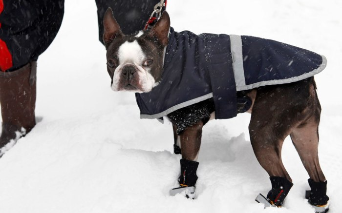 dog, dog booties, street style