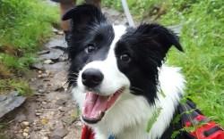 Merrell Meadow Dog Ambassador