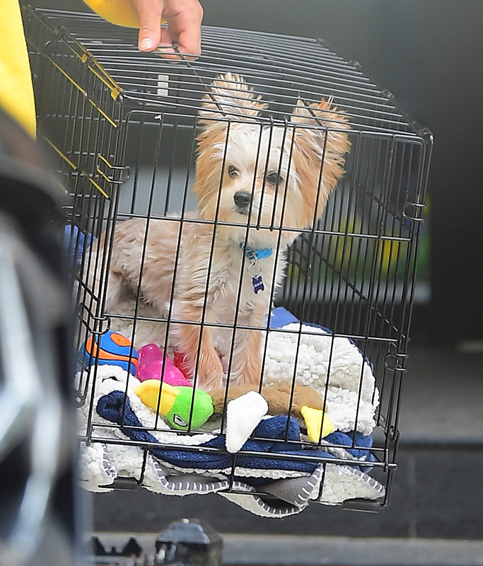 Justin Bieber was spotted looking refreshed after a vacation in the Bahamas this past week. He was spotted out in NYC with a golden tan, and a Golden Balenciaga hoodie , while carrying his adorable puppy Oscar. Justin took the dog with him as he visited his Pastor Carl Lentz.Pictured: Justin BieberRef: SPL5084822 300419 NON-EXCLUSIVEPicture by: DIGGZY / SplashNews.comSplash News and PicturesLos Angeles: 310-821-2666New York: 212-619-2666London: 0207 644 7656Milan: 02 4399 8577photodesk@splashnews.comWorld Rights, No Portugal Rights