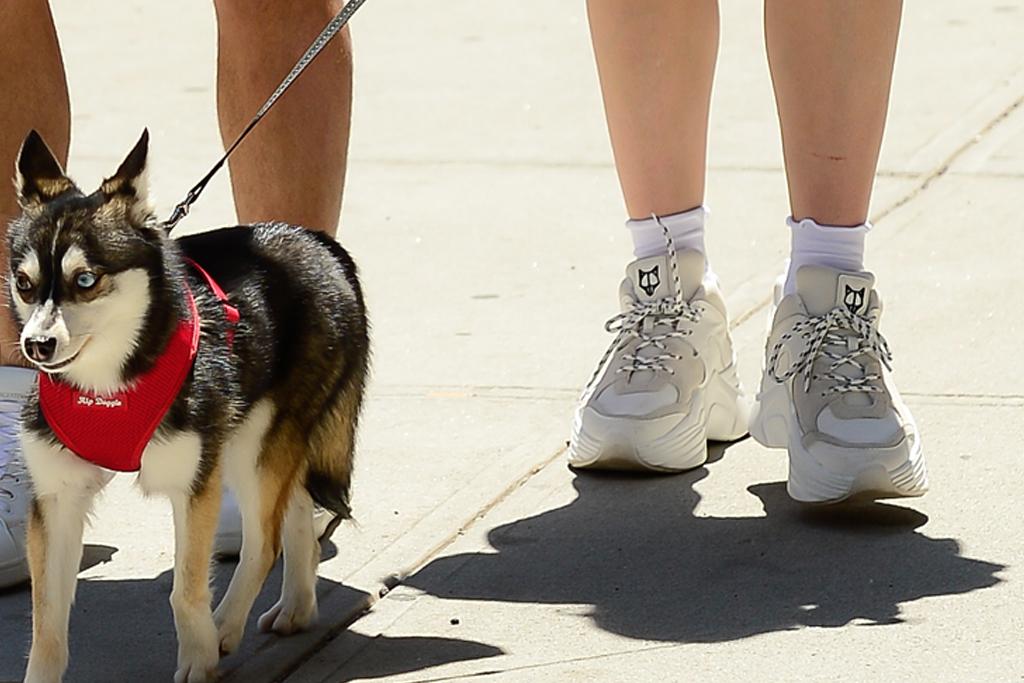 sophie turner, joe jonas, dogs, white sneakers, new york, walk dogs, naked wolfe shoes