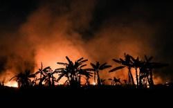 Trees burn in Porto Velho, Brazil,