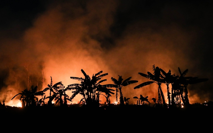 Trees burn in Porto Velho, Brazil, part of the Amazon