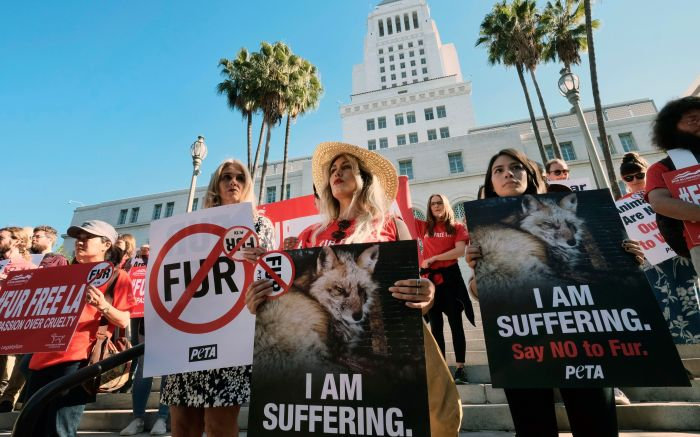 Margo Paine, center, joins protesters with the People for the Ethical Treatment of Animals (PETA) holding signs to ban fur in Los Angeles prior to a news conference at Los Angeles City on . Los Angeles would become the largest city in the U.S. to ban the sale of fur products if the City Council approves a proposed law backed by animal activists who say the multibillion-dollar fur industry is rife with crueltyFur Ban, Los Angeles, USA - 18 Sep 2018