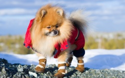 best-dog-shoes-boots