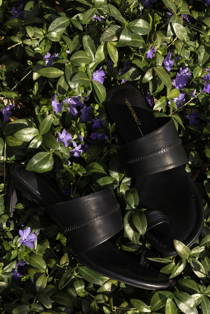 intentionally blank shoes, ving sandal, thong sandal