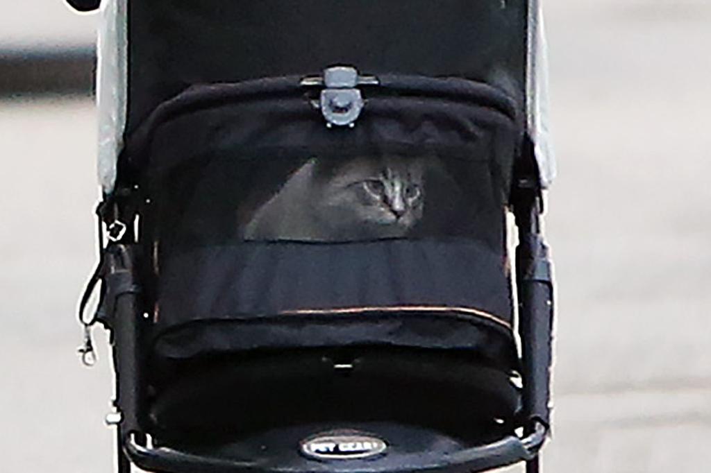Jennifer Garner, cat, strollers, los angeles,