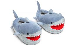 Shark-Slipper-Feature