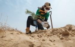 Timberland Tree Planting